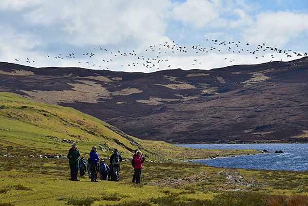 Picture of a group of walkers near a loch (lake), a large flock of geese flying above